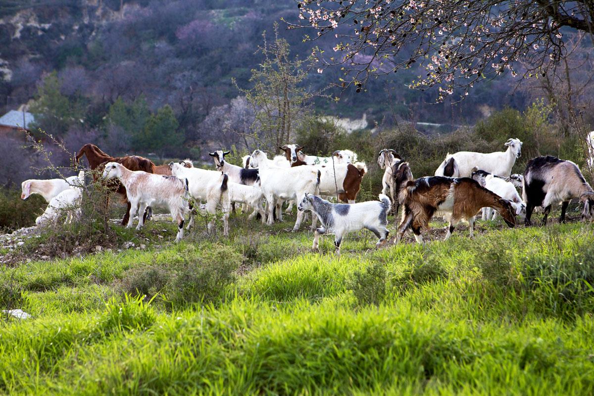 Kilani village – Cyprus